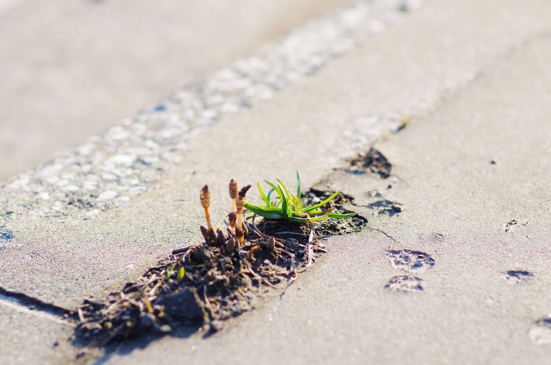 植物の繁殖