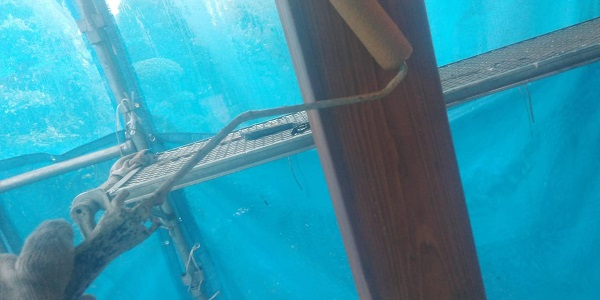 群馬県渋川市 S様邸 外壁塗装・付帯部塗装 軒天塗装 木部塗装 (3)